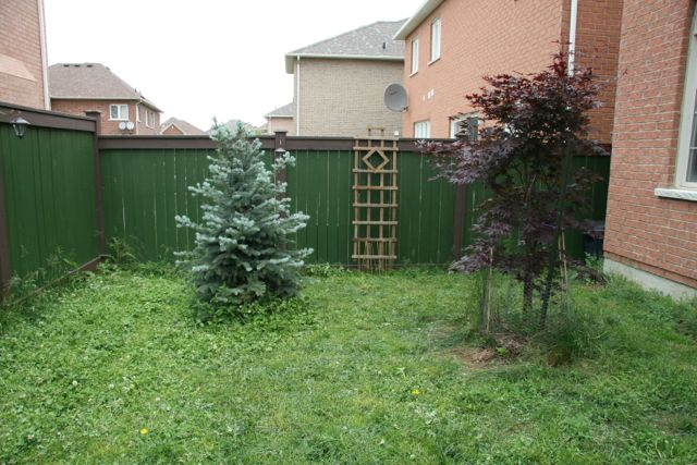small fenced yard with plants.