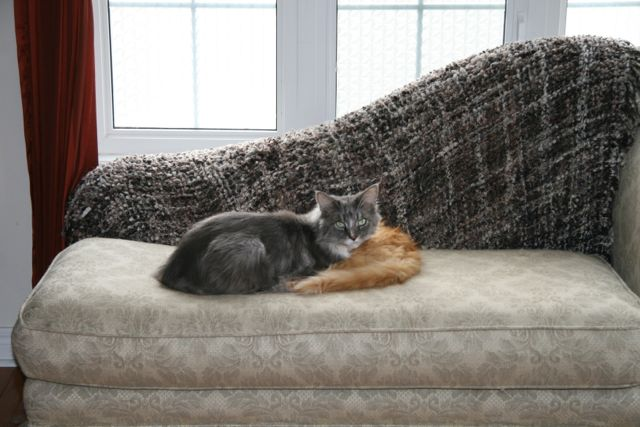 Grey and orange cats curled up on a chaise.