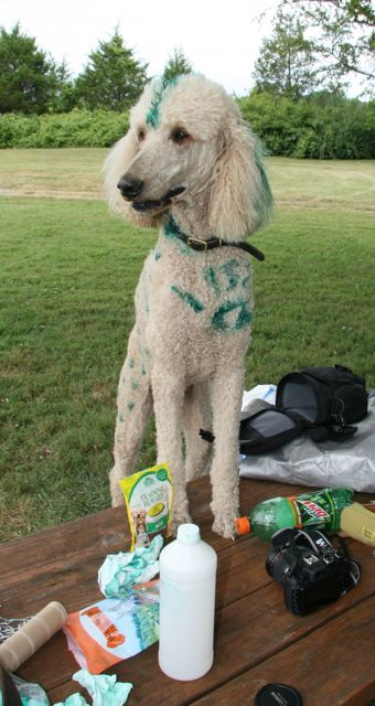 Green poodle.