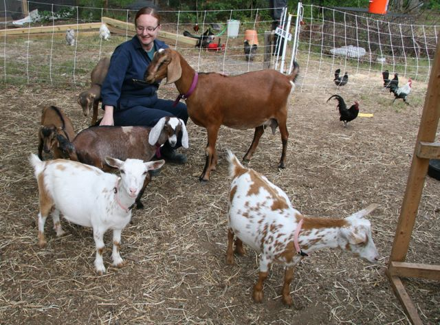 Goats surrounding a woman in coveralls.